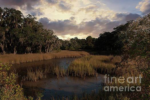 Dale Powell - Spanish Moss Marsh Sunset