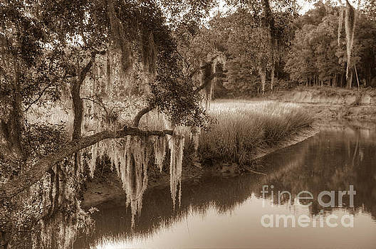 Dale Powell - Spanish Moss over the Creek