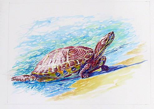 Spanish Turtle by Tomas OMaoldomhnaigh