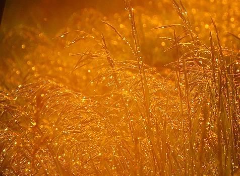Sparkle by Lori Frisch