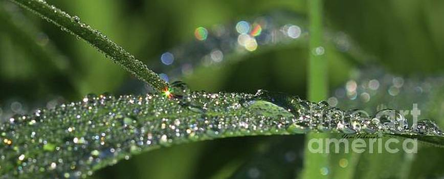 Sparkling droplets by Yumi Johnson