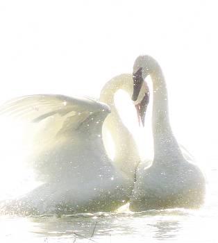 A Sparkling Romance by Lori Frisch