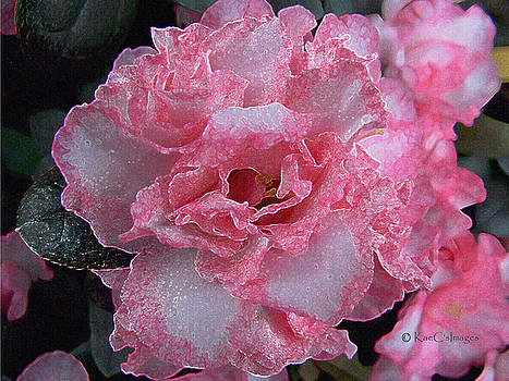 Sparkly Azalea by Kae Cheatham