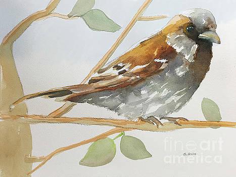 Sparrow 1 by Shane Guinn
