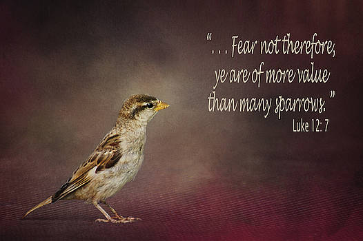 Nikolyn McDonald - Sparrow - Bible Verse