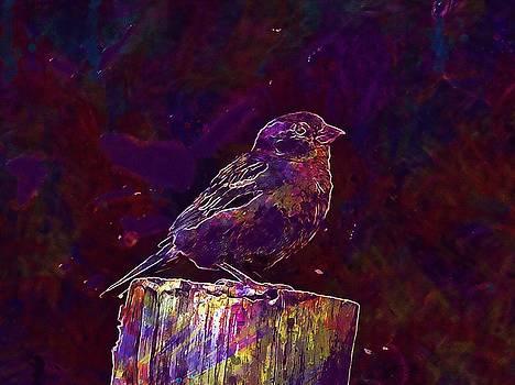 Sparrow Bird Feathers Nature Fauna  by PixBreak Art
