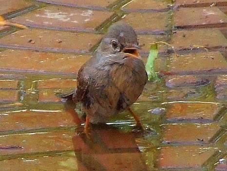 Sparrow in a puddle by Bill Vernon