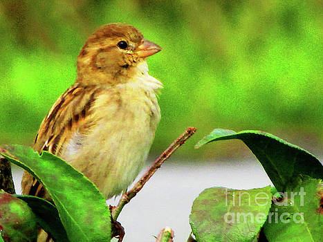 Sparrow in Green by Ron Tackett
