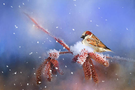 Sparrow In Winter by Theresa Tahara