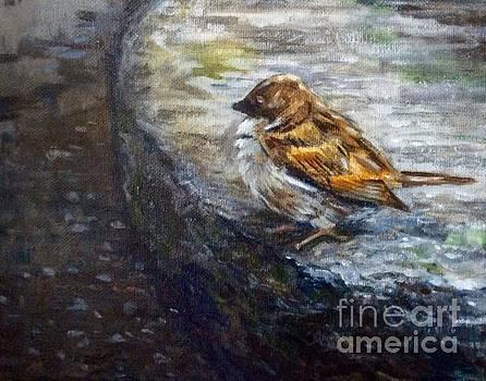 Sparrow on the garden stone by Hilary England