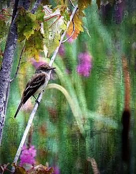 Sparrow by Scott Fracasso