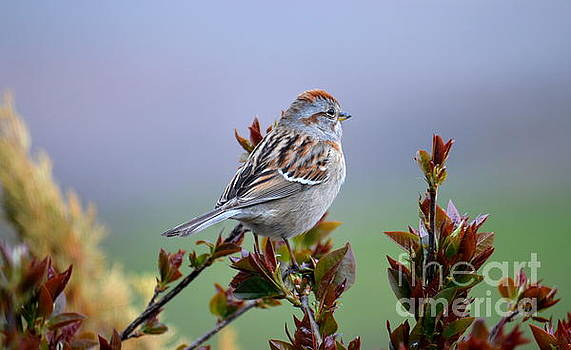 Sparrow Song by Jaunine Roberts