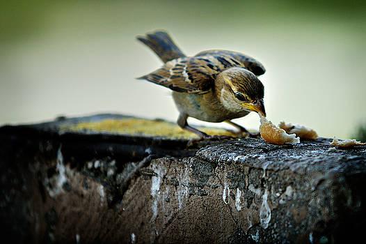 Zoran Buletic - Sparrow