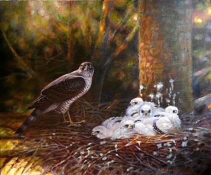 Sparrowhawk family by Anna Franceova