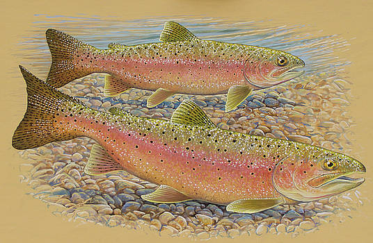 Spawning Trout by Shari Erickson