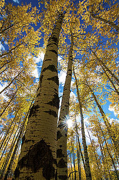 Spearfish Aspens by Chris Allington