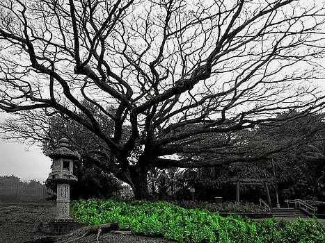 Daniel Hagerman - SPECIMEN TREE of LILIUOKALANI PARK - HAWAII