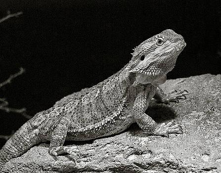 Marilyn Hunt - Speckled Iguana Lizard