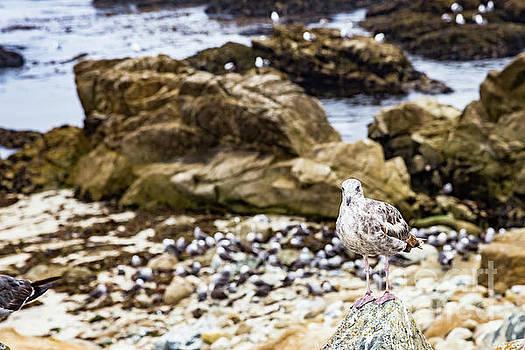 Lisa Lemmons-Powers - Speckled Seagull