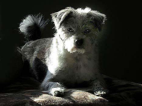 Speckles in Sunlight by Linda A Waterhouse