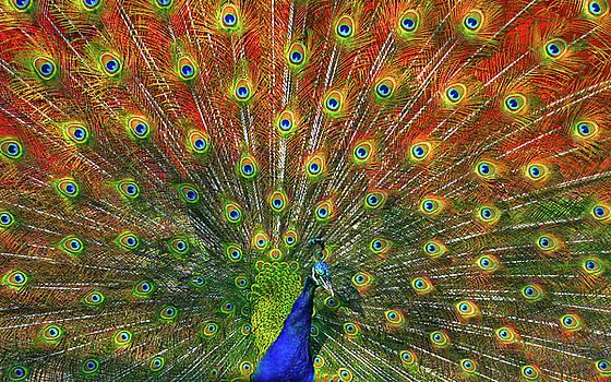 Spectacular Peacock Dance by Nabila Khanam