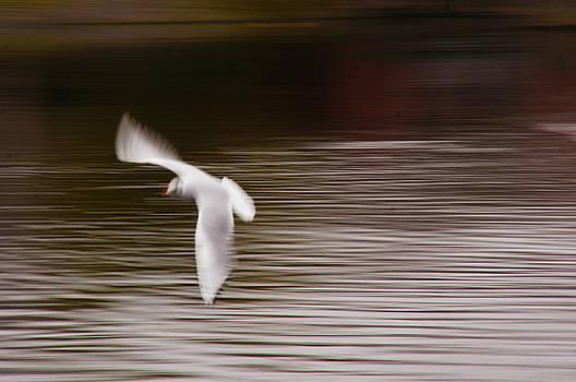 Speedy Gull by Nik Watt