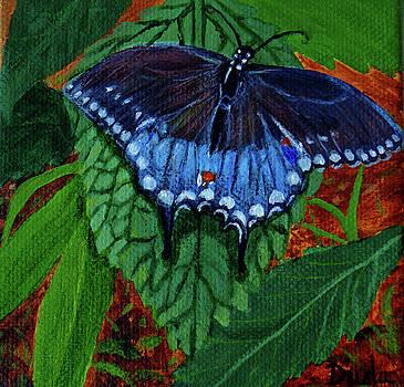 Spicebush Swallowtail by Susan Duda