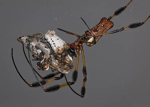 Warren Sarle - Spider and Moth