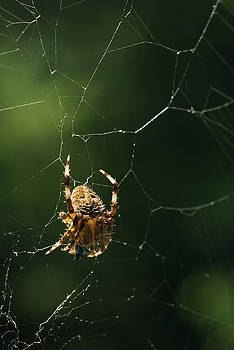 Spider and Web, Balcony Garden, Hunter Hill, Hagerstown, Marylan by James Oppenheim