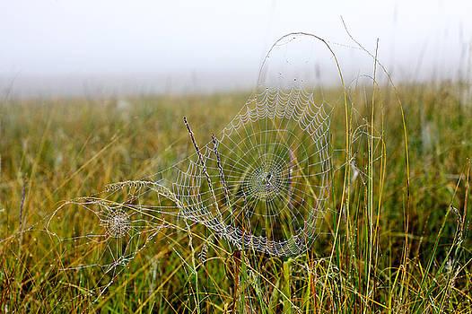 James Steele - Spider Art Work