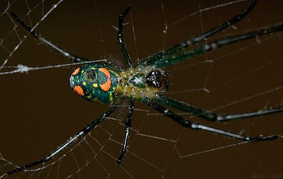 Warren Sarle - Spider Belly