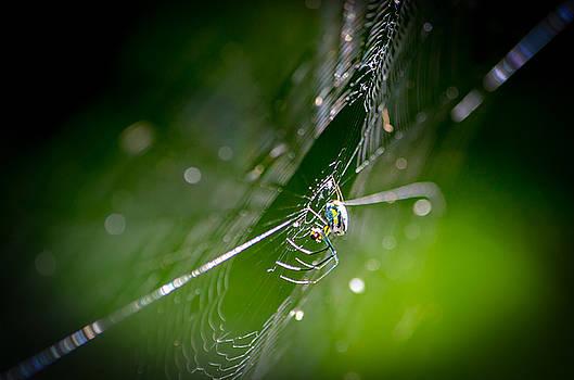 Spider by Craig Szymanski