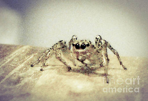 Spider by Diane McDougall