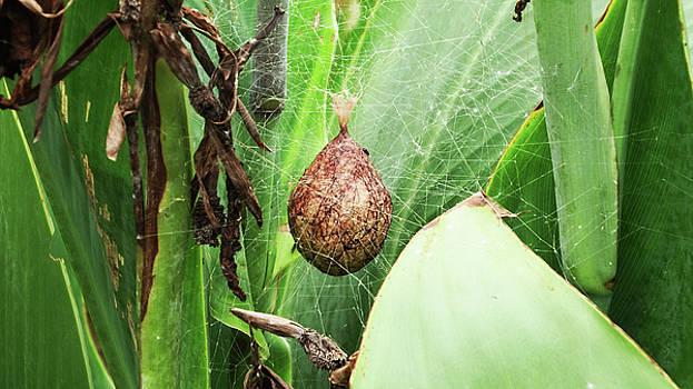 Spider Egg Sack by Cathy Harper