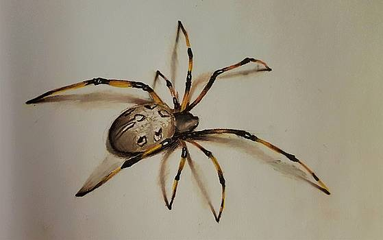 Spider by Gilca Rivera