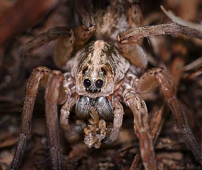 Warren Sarle - Spider Having a Snack