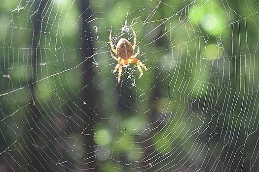 Spider by Iancau Crina