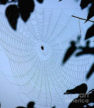 Spider in Web by Sheri LaBarr