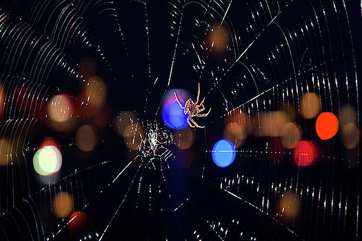 Spider by Joann Vitali