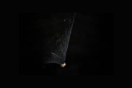 Spider by Kelly E Schultz