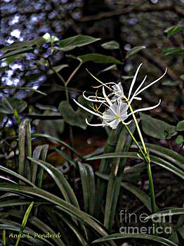 Spider Lilly in the wild by Anne Pendred