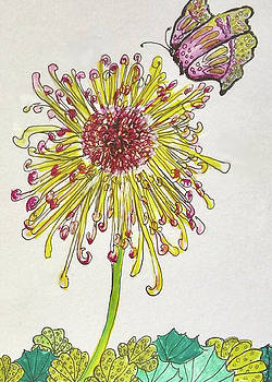 Spider Lily by Harriett Masterson