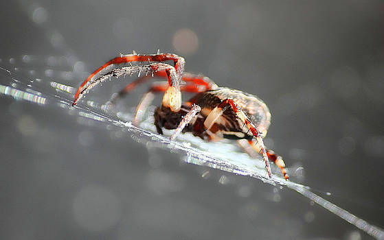 Spider by Manuel Benito