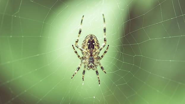 Jacek Wojnarowski - Spider on the web B