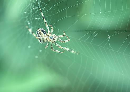 Jacek Wojnarowski - Spider on the web C