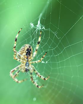 Jacek Wojnarowski - Spider on the web D