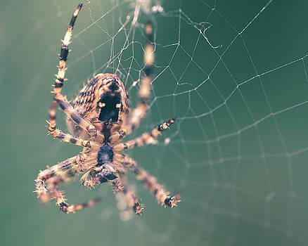 Jacek Wojnarowski - Spider on the web E