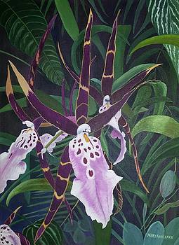 Spider Orchid by Mary Ann Leake
