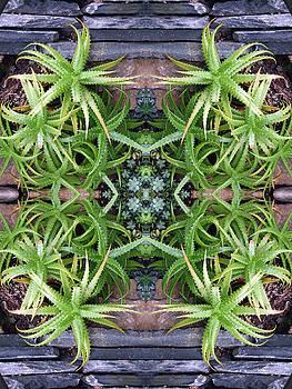 Spider Plant Series 1 of 4 by Keri Renee