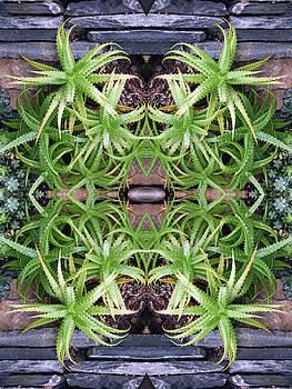 Spider Plant Series 2 of 4 by Keri Renee